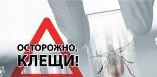 Пик активности клещей на Южном Урале - что делать при укусе