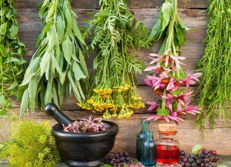 сбор лекарственных трав осенью