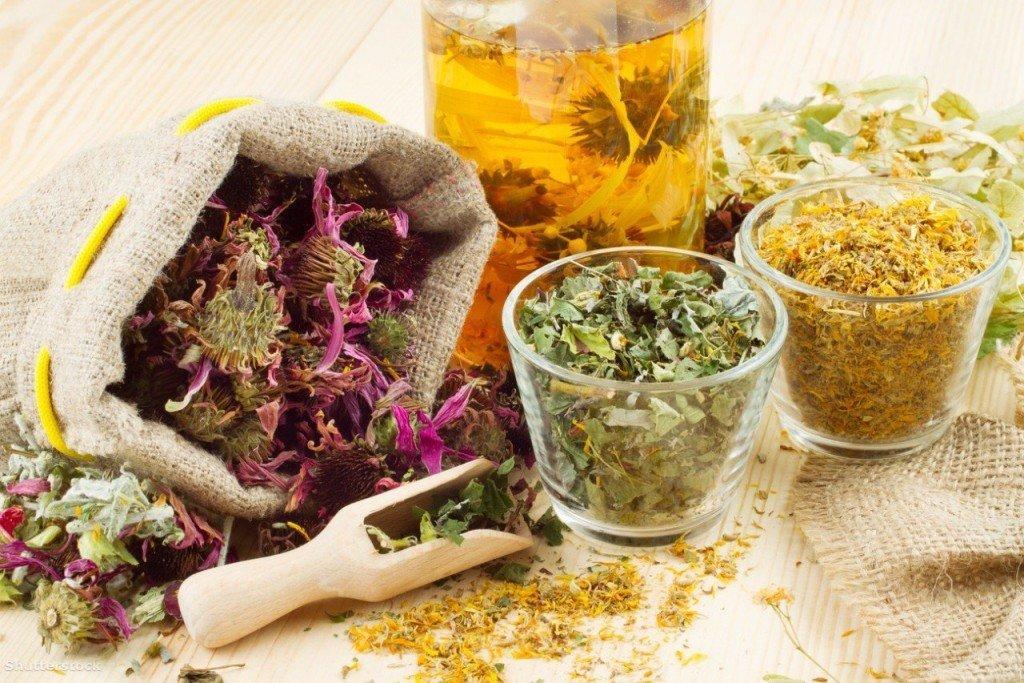 лечение травами кашля