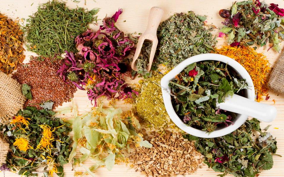 какие лекарственные травы собирать осенью