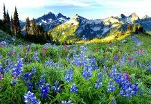 полезные горные травы