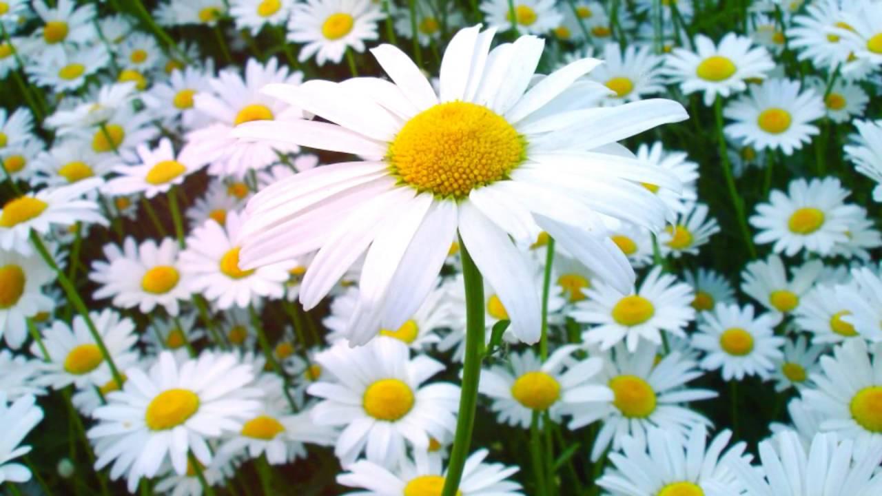 пищевые и лекарственные дикорастущие растения