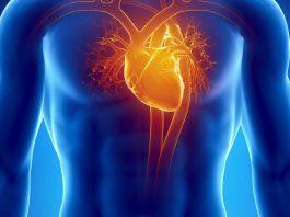 укрепление сердечно сосудистой системы с помощью утренней гимнастики