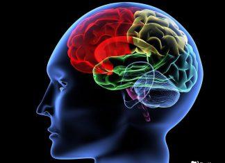 повышение мозговой активности способы