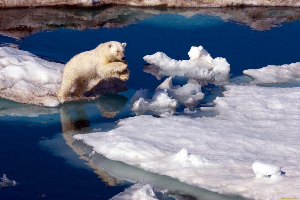 скорость таяния ледников